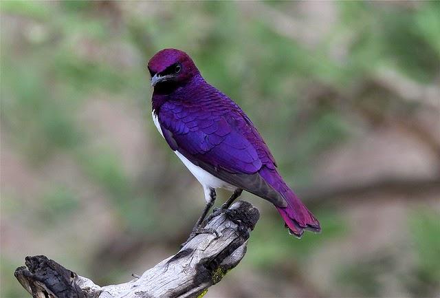 Códigos Estandarizados de Especies de Aves de 4 y 6 letras (