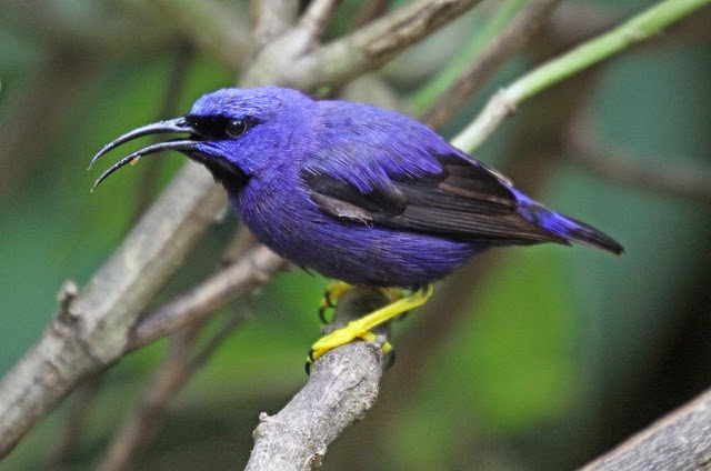 Identificación de aves